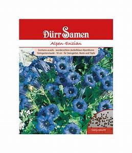 Petunien Samen Kaufen : d rr samen alpen enzian dehner ~ Frokenaadalensverden.com Haus und Dekorationen