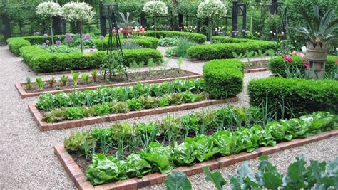 vegetable garden layout  ways  improve  garden plant