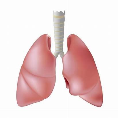 Lungs Fibrosis Cystic Human Longen Definition Polmoni