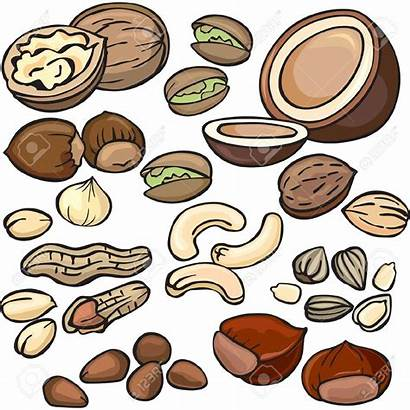 Nuts Clipart Nut Seed Icon Tree Clip