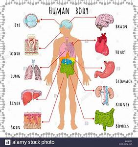 Human Body Medical Infographics With Person Silhouette And