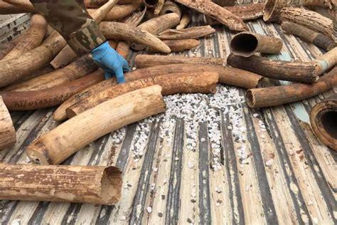 Smugglers sent for trial over ivory in Kampala Uganda