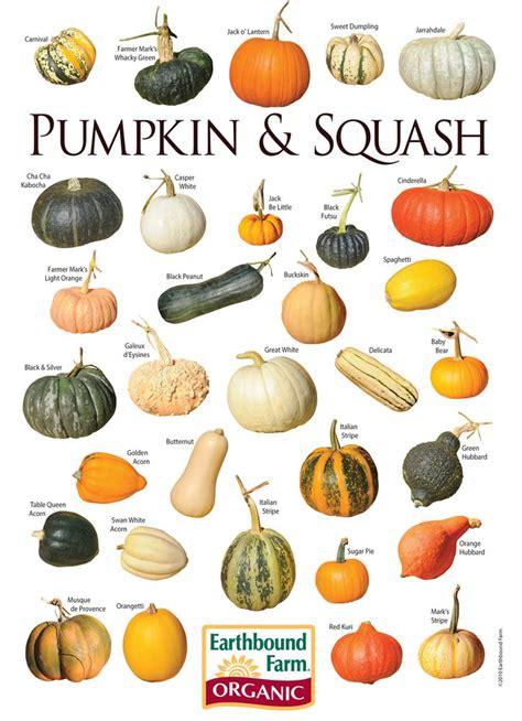 seedling crafts best 25 pumpkin plants ideas on pumpkin