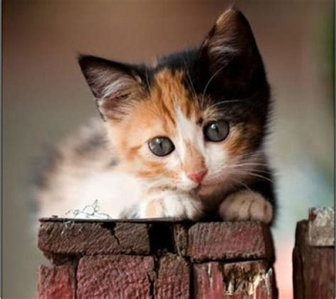 Sweet Animals Wallpaper - sweet barn cats animals background wallpapers