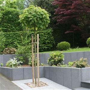 Steine Bepflanzen Garten Steine Garten Bepflanzen Arten Bodendecker