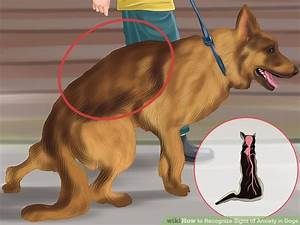 Recognize Signs of Anxiety in Dogs