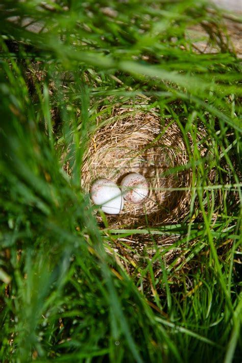 Bird In Everything: Unusual Bird Nests
