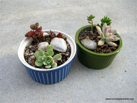 succulent gardens in pots garden my spare time