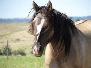 Mustang Eco Tours : Praise the tall but saddle the small ...