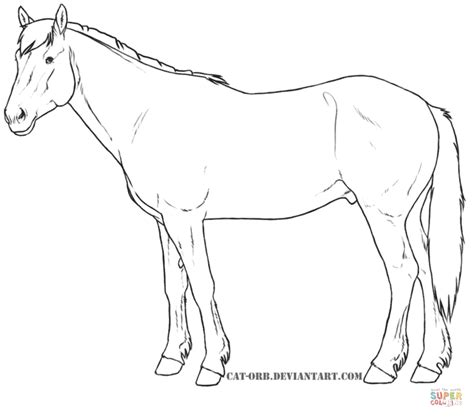 quarter horse coloring pages  getcoloringscom  printable colorings pages  print  color