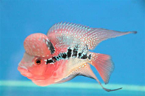 Define A Good Fish….