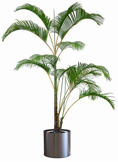 Plants Trees Transparent Tree Palm Houseplant Others