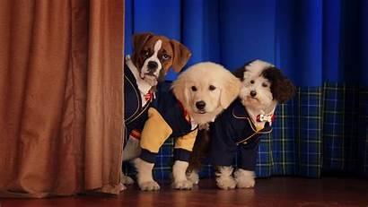 Pup Academy Season Netflix Cachorros Escuela Trailer