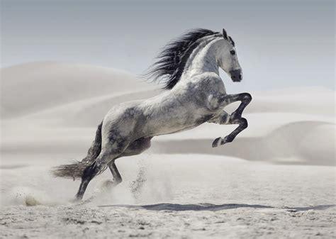 peinture chambre romantique cheval dans le désert tableau grand format cambrure du