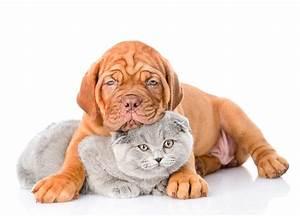 Weißer Wurm Katze : bilder welpe dogue de bordeaux katze hunde zwei tiere wei er ~ Markanthonyermac.com Haus und Dekorationen