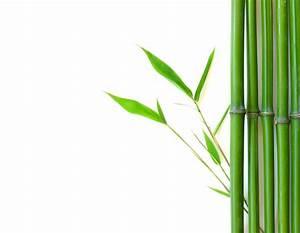 Creative Leaders Wander Like Bamboo - Jason Barger