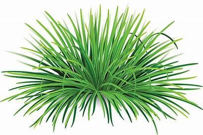 Grass Ornamental Clip Illustrations Bunch Similar