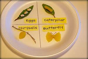 Kindergarten Tales: Life Cycles