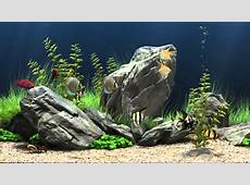 Fish Tank Backgrounds PixelsTalkNet