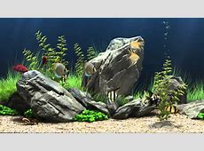 Dream Aquarium Virtual Fishtank #1 YouTube