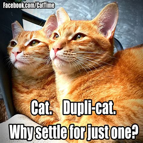 Cat Humor #4  Page 16  Forums At Psych Central