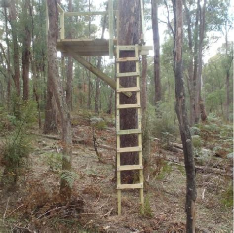 tree stands australia the 25 best tree stand ideas on stands deer stands and deer