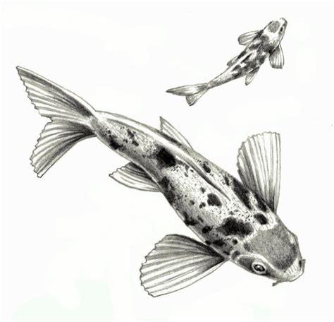 japanese koi fish isolated   white background pencil