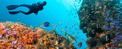 Dive Resorts Grand Cayman - your guide to coral reef diving in grand cayman the