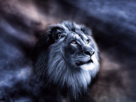 SANGAR 30++ Gambar Singa Lengkap Gambar Foto