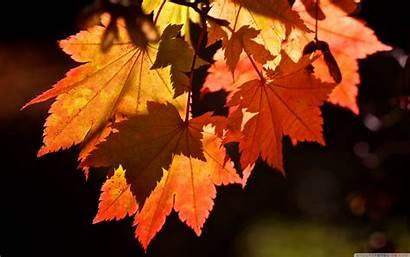 Leaves Autumn 4k Desktop Wallpapers Ultra Smartphone