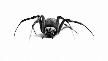 Spider Cool Moving Spiders Fast Animated Animation