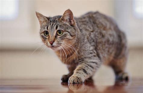 cat calm ways helpful calming petmd let masterclip interpretation accurate dreaming most