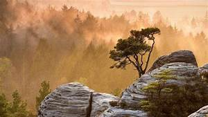 Nature, Landscape, Mountains, Trees, Rock, Mist, Forest