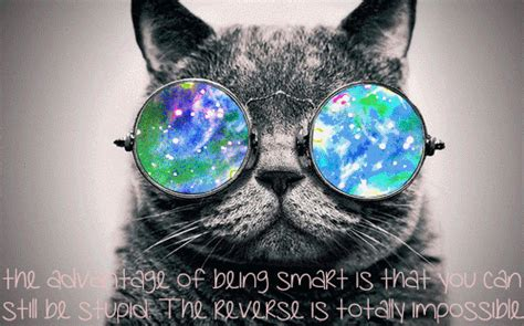 Cool Cat Wallpaper Hd Cat Glasses Gif Find Share On Giphy