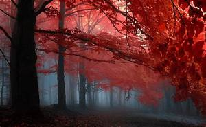 Forest Full HD Wallpaper and Background Image | 2000x1234 ...