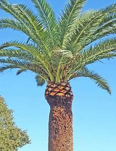 Jardinier Paysagiste Aubagne : emejing taille de palmier pictures ~ Premium-room.com Idées de Décoration
