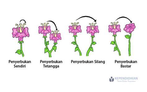jenis jenis penyerbukan tumbuhan disertai contoh