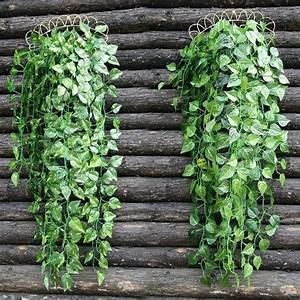 Plante Retombante Exterieur Plante Tombante Exterieur