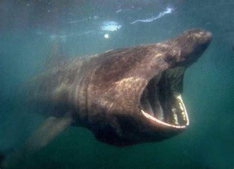 chambre de bonne marseille le requin pèlerin