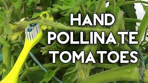 How To Pollinate Indoor Plants In Home