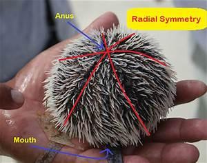 Image Gallery radial symmetry