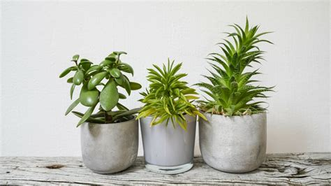 10 Indoor Plants That You Water Only Once A Month