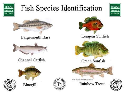 brandedhub fish species