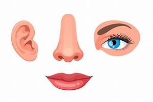Four Parts Of Human Face Ear Nose Eye And Lips Educational