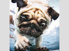 Hunde unter Wasser Fotos von Seth Casteel [GEOLINO]