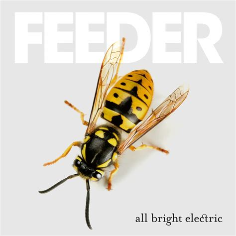 Review Feeder 'all Bright Electric'  The Coolest Album