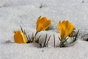 Gartenarbeit Im Februar : gartenarbeiten im februar ~ Lizthompson.info Haus und Dekorationen