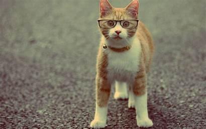 Funny Screensavers Kitten Cat Desktop Backgrounds Wallpapers