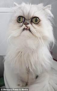 Meet The New Grumpy Cat Express Digest