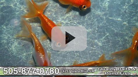 pond quality fish baits